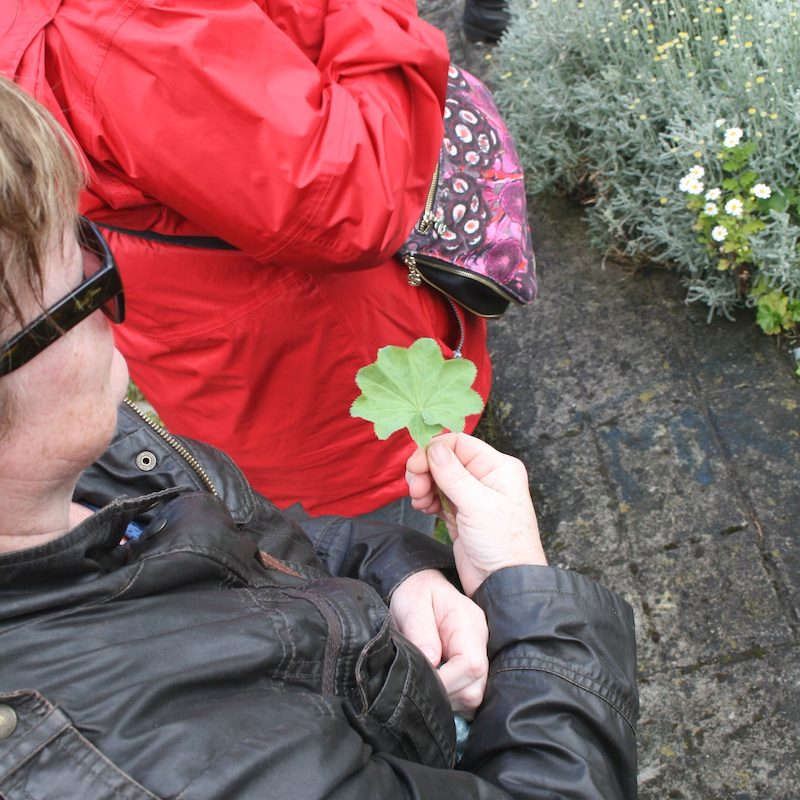 Dr Clare Herb Walk Galway
